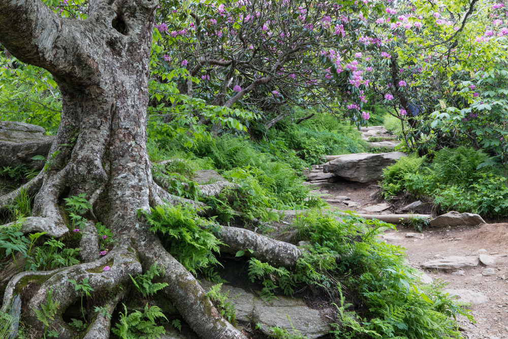 a Craggy Gardens hiking trail on your North Carolina road trip