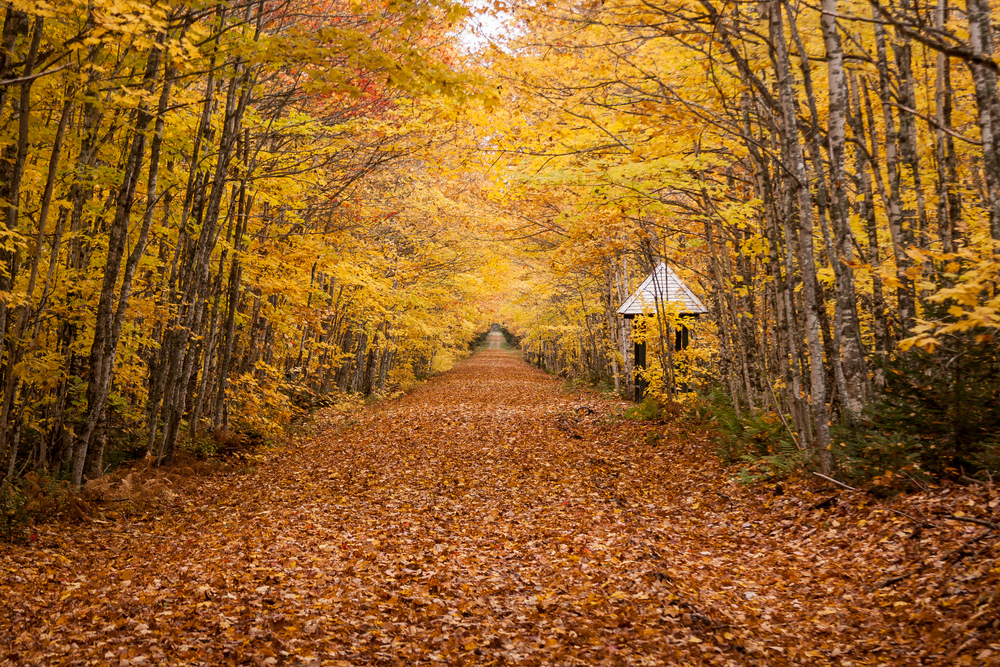 prince edward island is one of the best places to experience fall in canada
