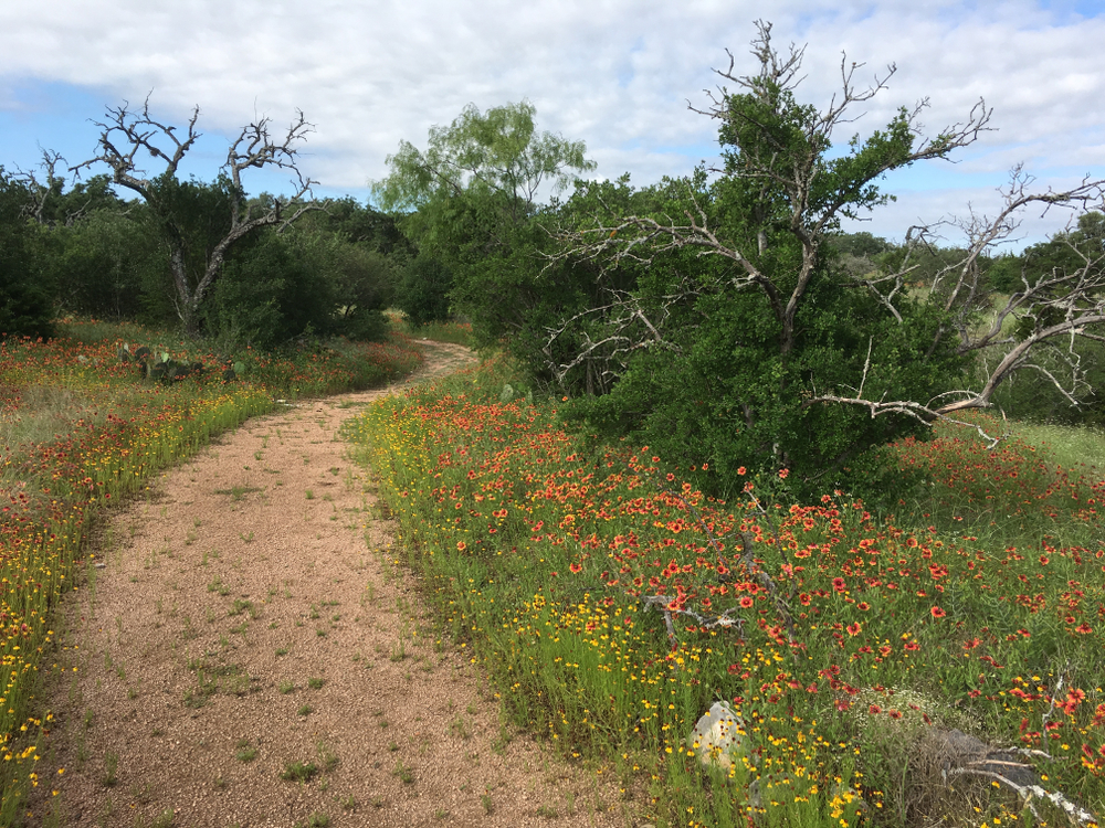 dirt path winding through small wildflowers