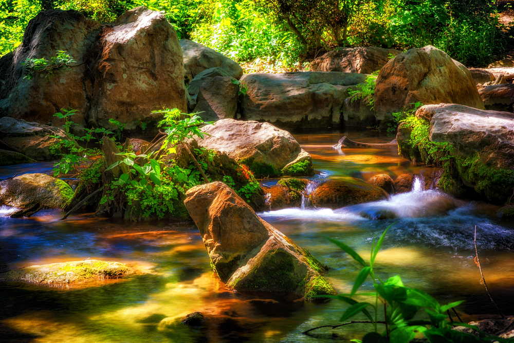 river flowing through rocks and plants