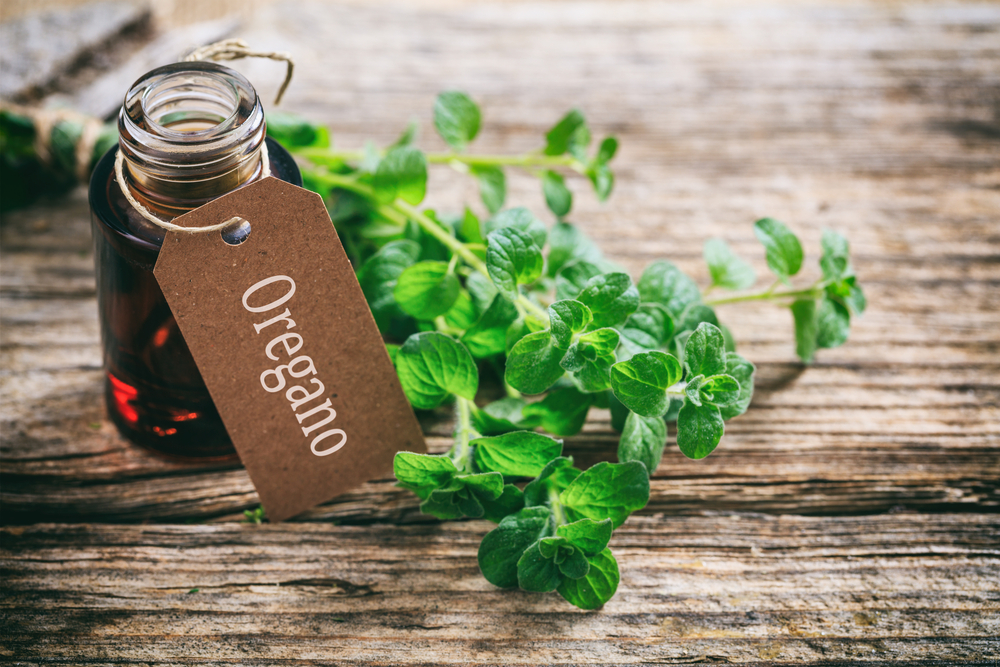 Oregano on a wooden table
