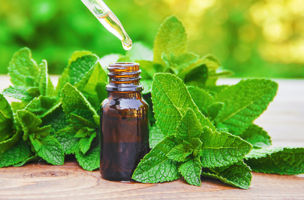 Peppermint on a table with an oil bottle