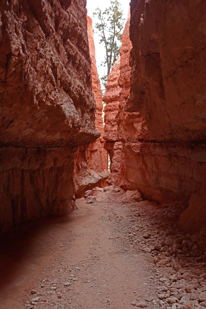 photo of wall street trail one of the things to do in bryce canyon