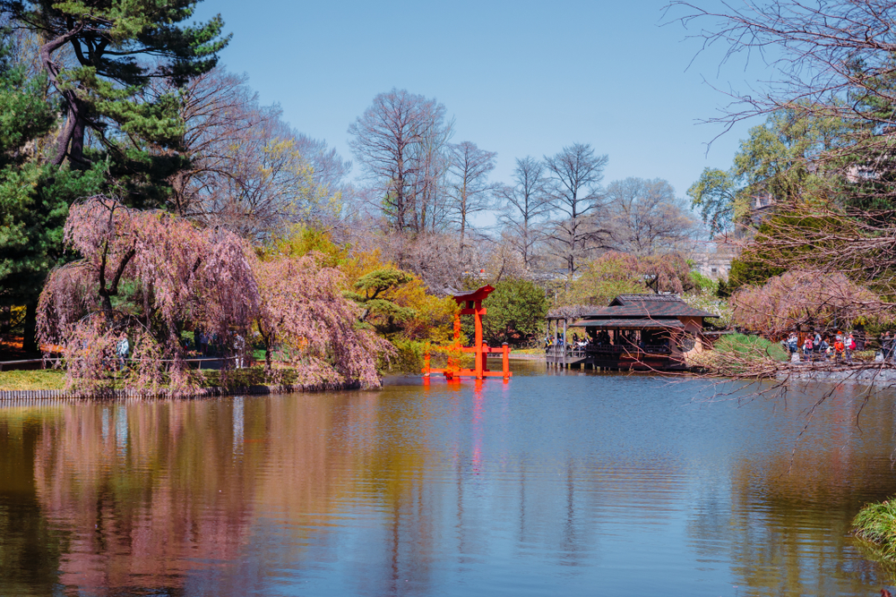 The view of the Japanese Garden with the Cherry Blossoms in bloom from across a pond,