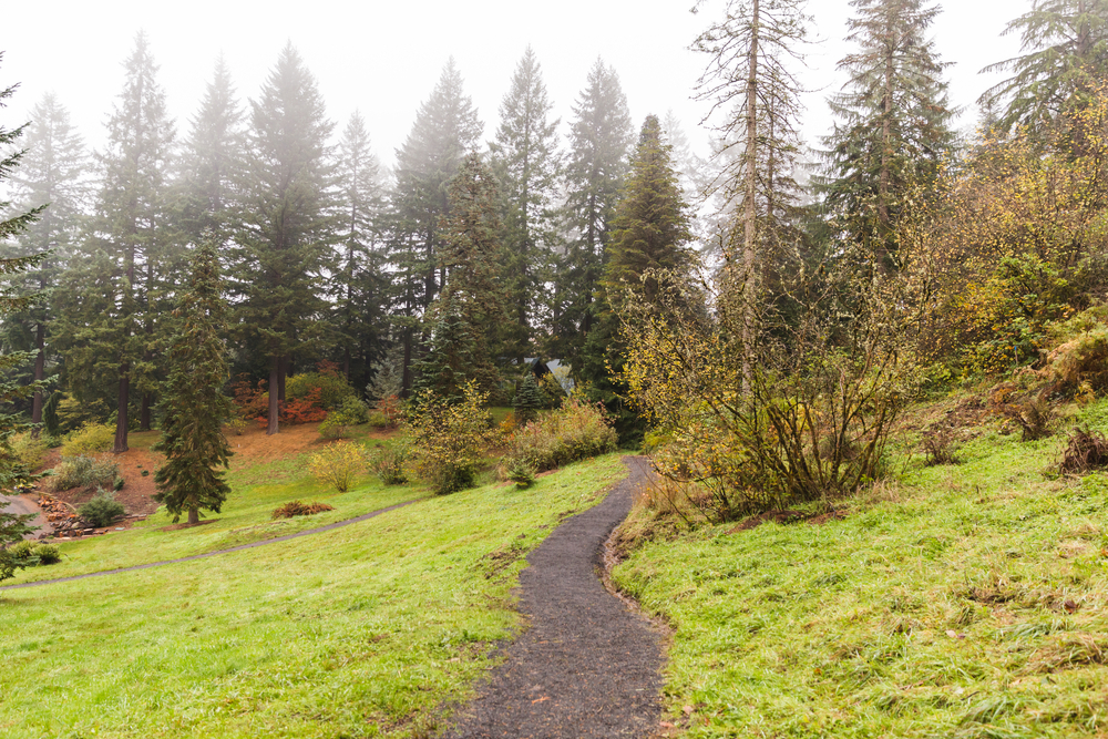 A path leading into the misty trees of the Hoyt Arboretum. Exploring this arboretum is one of the best things to do in Portland, Oregon