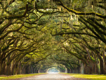 gorgeous spanish moss tunnel in places to visit in the south