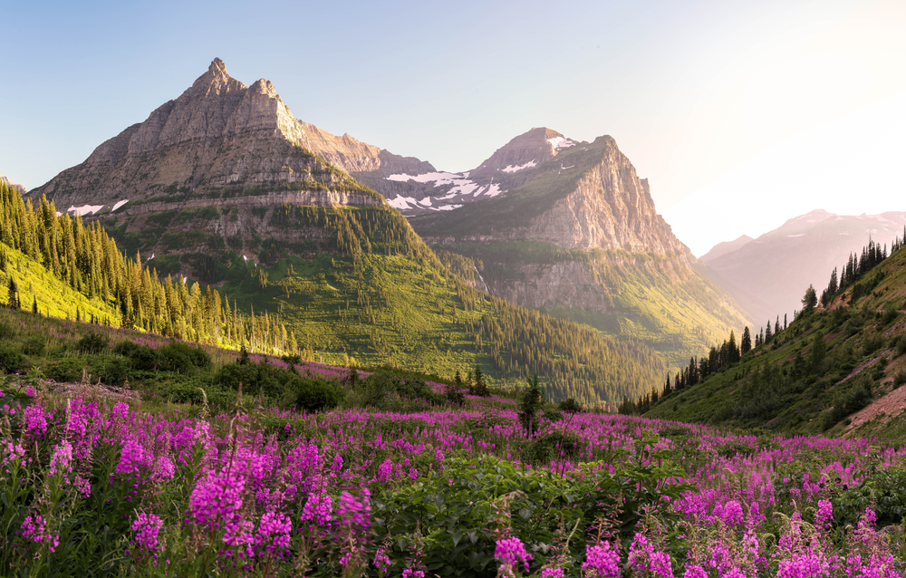The Montana landscape with bright pink flower fields, tall trees, and mountains in the distance one of the best honeymoons in the usa