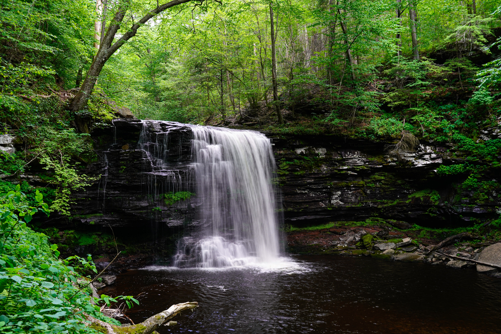 One of the many waterfalls surrounded by dense forest on the trail of Ricketts Glen one of the best hikes in the usa