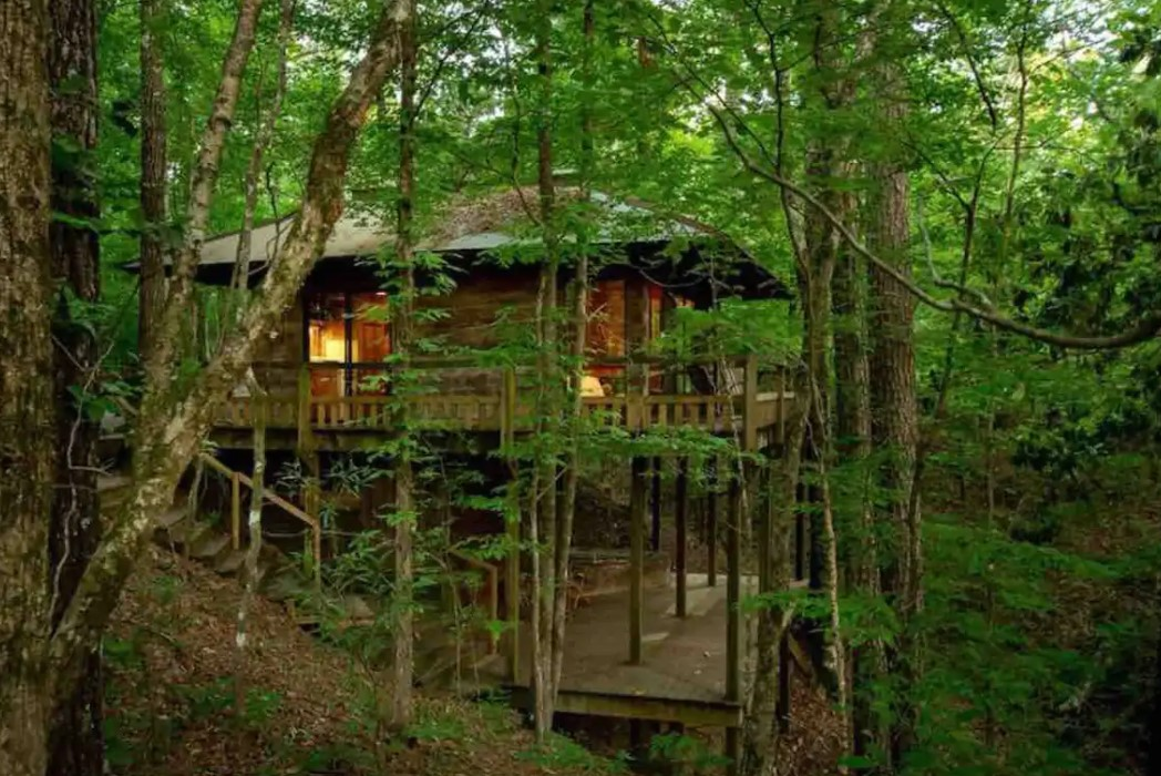 A cabin surrounded by dense green woods