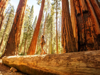 best hikes in the USA is the redwoods