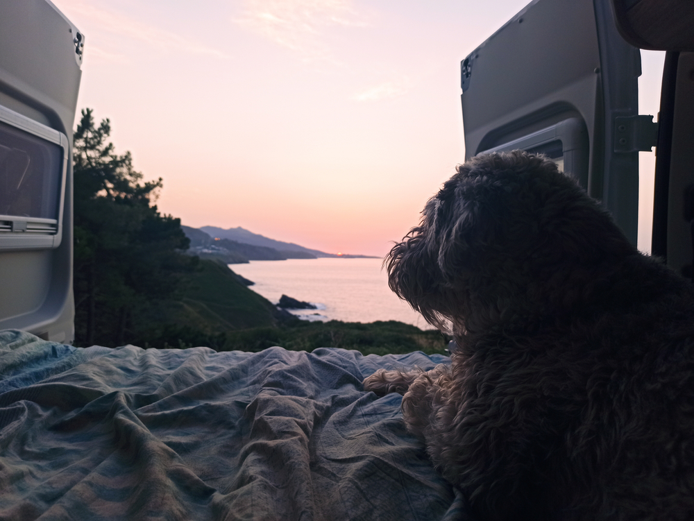 photo of a dog in the back of a van at sunset