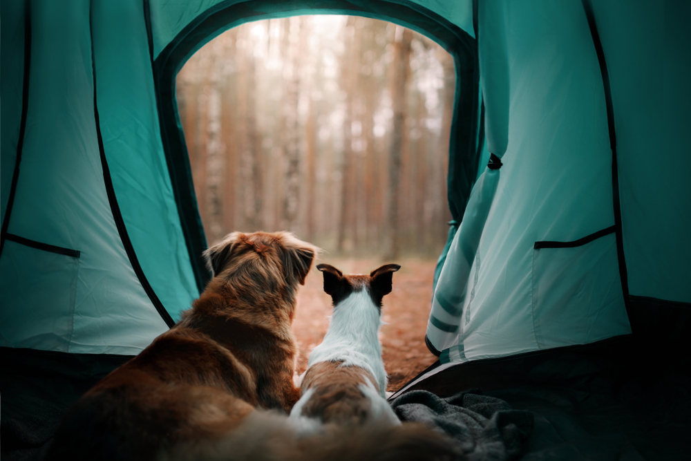 photo of two dogs laying in a tent