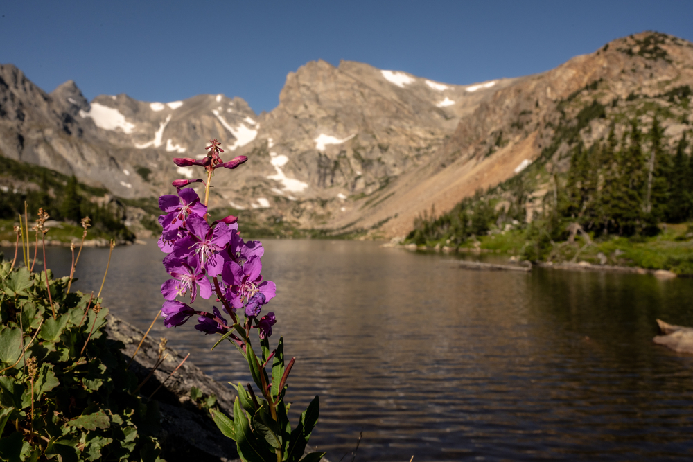 Lake Isabelle is one of the most stimulating intermediate hikes in Colorado's Indian Peaks wilderness.