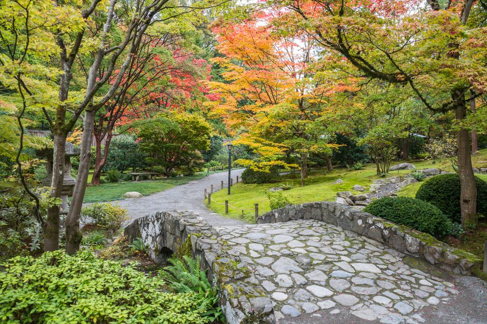 seattle fall foliage