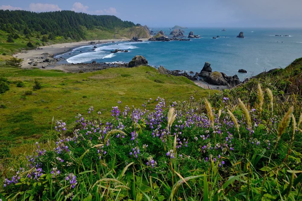 A wonderful view of a field and the beach in Oregon