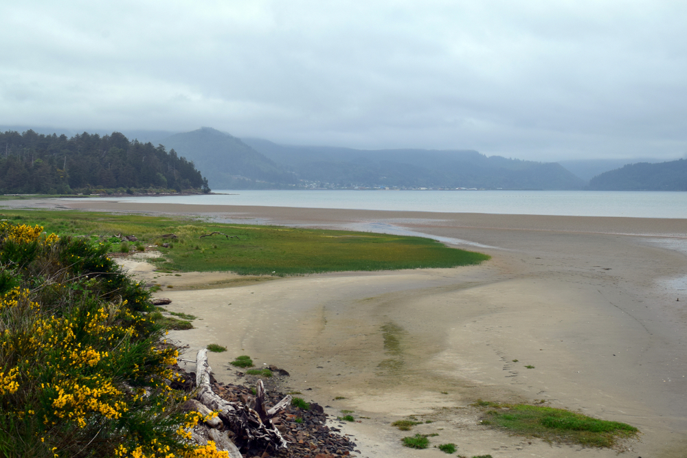 Peaceful photo of the Bayocean peninsula. There is small yellow flowers and driftwood in the foreground, and the blue, foggy, Tillamook bay in the background. The Bayocean Peninsula loop is one of the best hikes in Oregon.