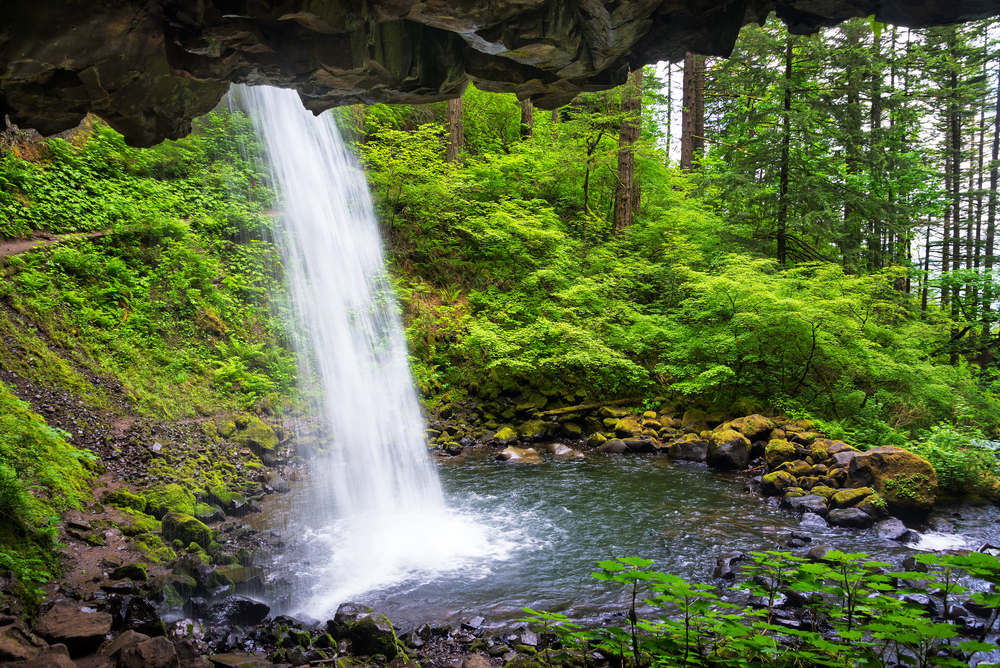 Photo taken from behind Horsetail Falls. A stream of water crashes into a small pool surrounded by lush greenery.