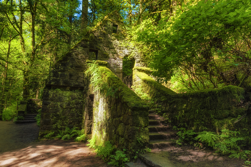 Photo of a moss and fern covered  stone house in the forest. The beautiful structure is being reclaimed by nature and is known by locals as The Witches Castle. It is located in Forest Park, one of the best hikes in Oregon.