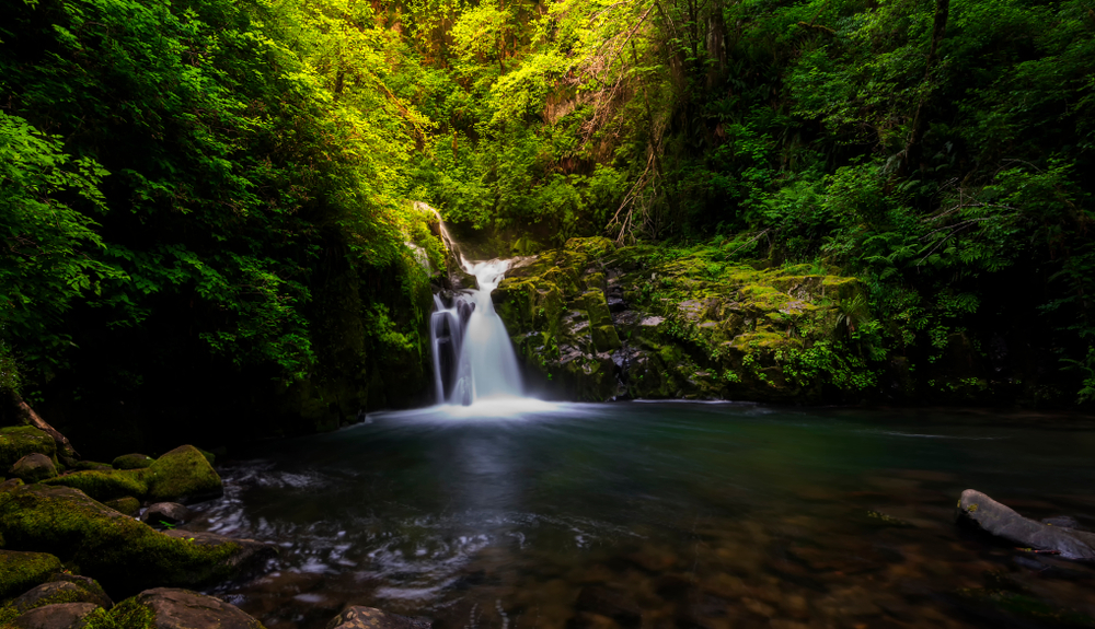 A small waterfall spills into a charming greenery filled pool at Sweet Creek falls, one of the best hikes in Oregon.