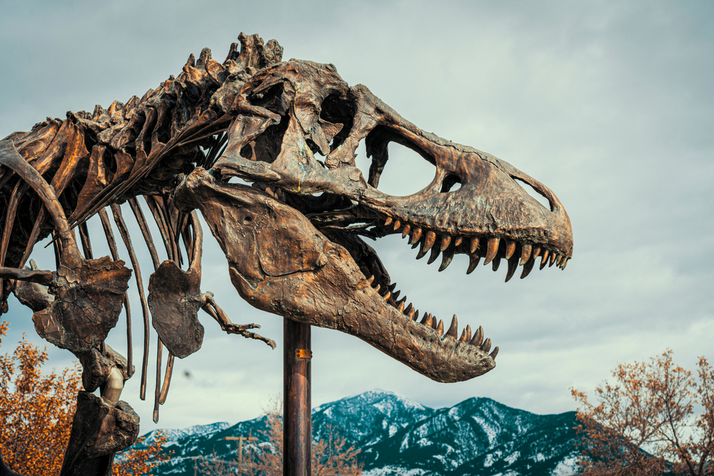 a photo of the museum of the rockies, one of the best things to do in montana with kids