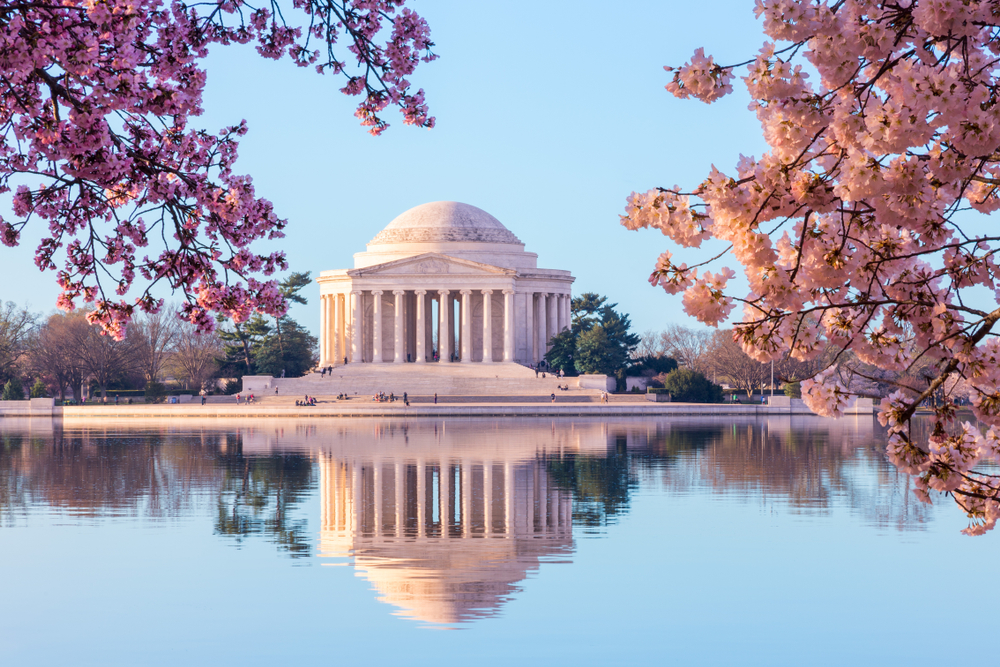 The Lincoln Memorial in Washington DC surrounded by blooming cherry blossom trees