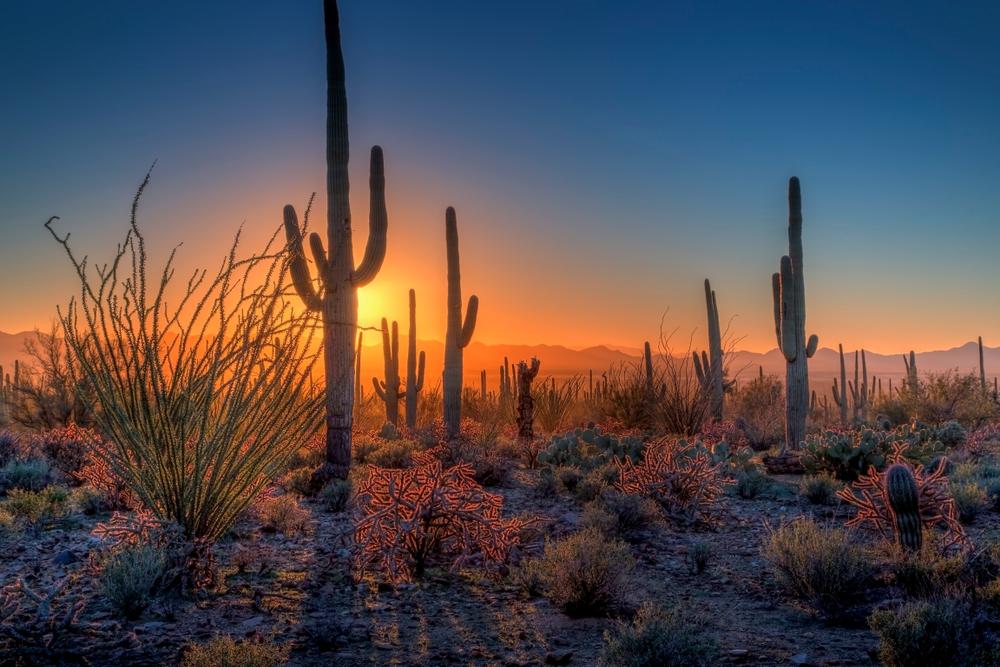 a visit to Saguaro National Park is one of the best weekend getaways in Arizona