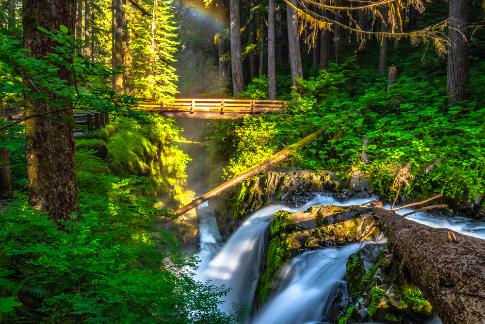 A waterfall with a bridge over it in the Hoh Rainforest on the Olympic Peninsula. The sun is shinning through the trees and there is a small rainbow that is visible. One of the best west coast road trip stops.