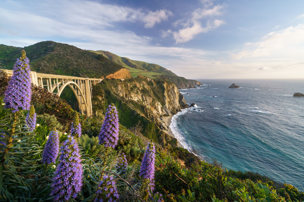 A view of Bixby Bridge from a cliffside that is covered in cone shaped purple flowers. You can see the bridge, the rocky mountains and cliffs, and the pacific ocean with rock formations in it. It is sunny with wispy clouds.