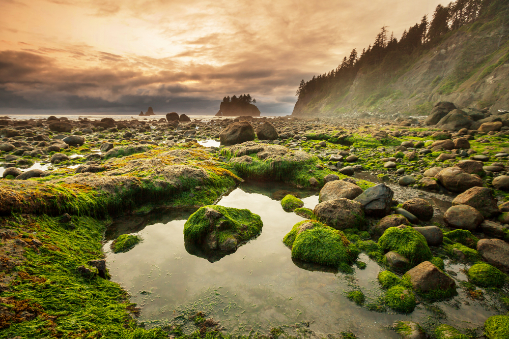 A rocky landscape in the Olympic National Park in Washington state. There are pools of water on the rocks and they are covered in moss. In the distance you can see a body of water and a rocky cliff covered in trees. One of the best west coast road trip stops.