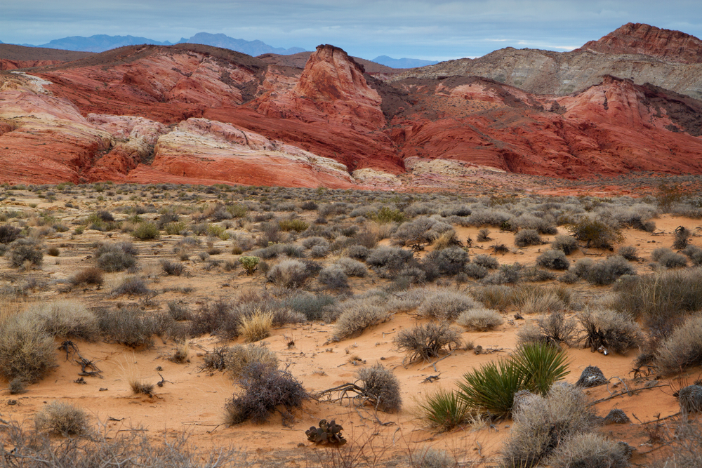 desert brush with colorful red, orange, and white striped mountains along the Rainbow Vista trail