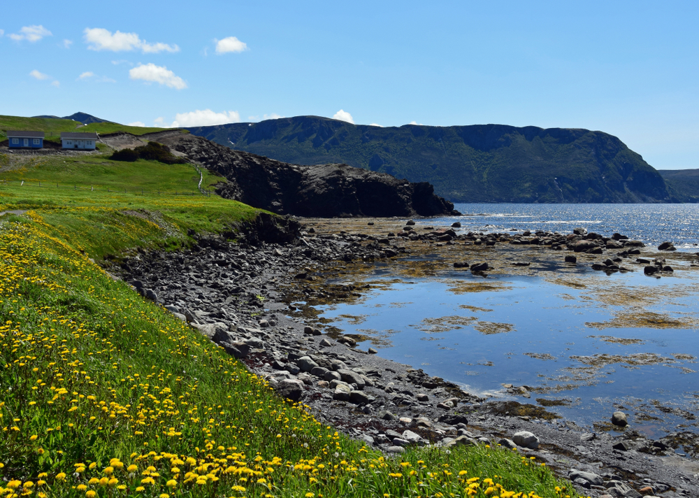 Looking at the shore line of the Bonne Bay. There are yellow flowers growing in the grass along the shore. The shore is also full of rocks and you can see algae floating in the water. In the distance there is a mountain. It is one of the best stops on a West Newfoundland itinerary.