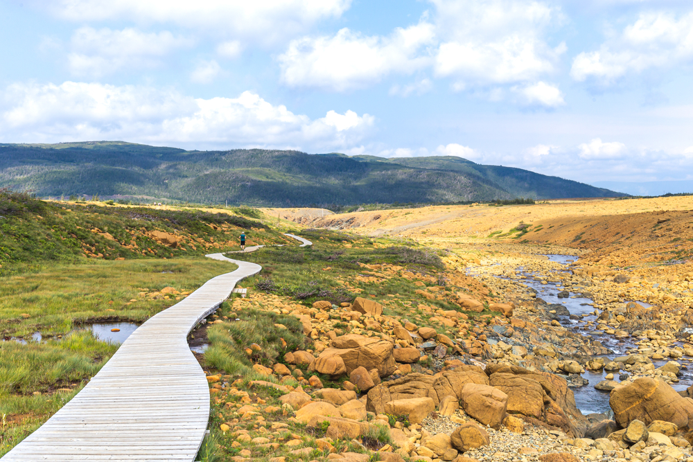 A boardwalk that goes through the tablelands. It is a part of the tablelands trail in Gros Morne National Park. On one side of the boardwalk there is a sandy desert looking landscape. On the other side there is a lush green landscape.